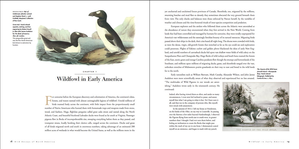 Wildfowl in Early America
